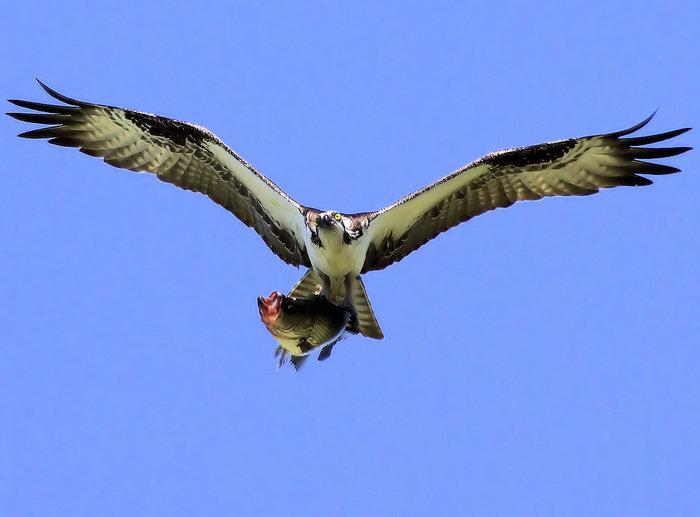 osprey-5-15-10-22.2-.jpg